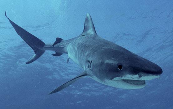 Shark Savers Malaysia